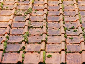 Démousser sa toiture : Pourquoi est ce si important ?