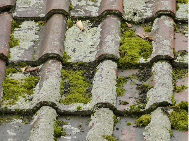 Read more about the article Nettoyage de toiture : 3 erreurs à ne pas commettre