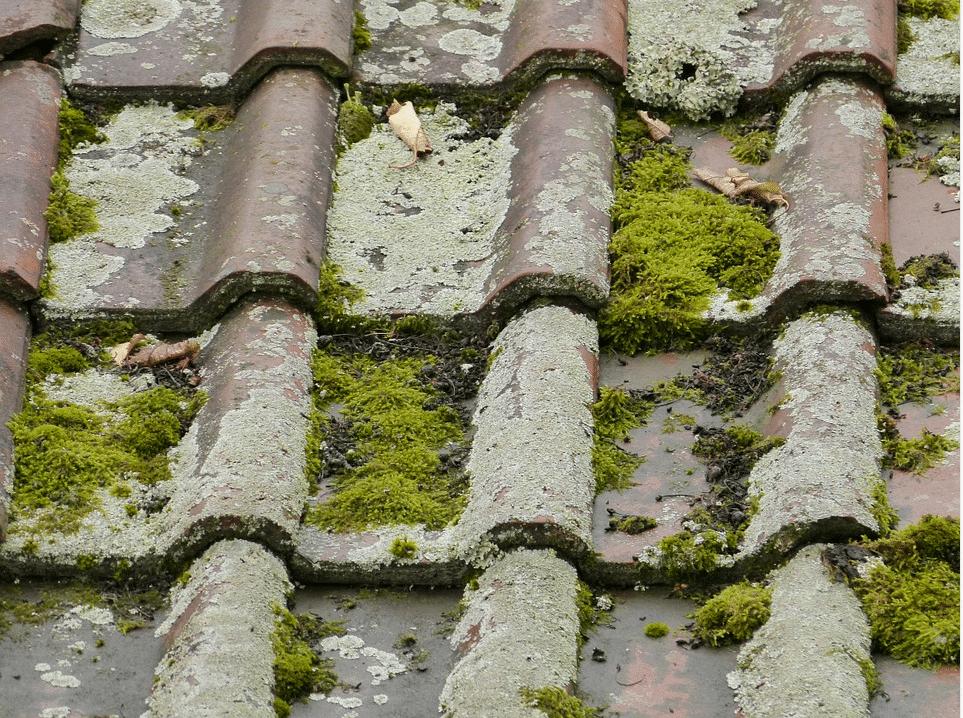 You are currently viewing Nettoyage de toiture : 3 erreurs à ne pas commettre